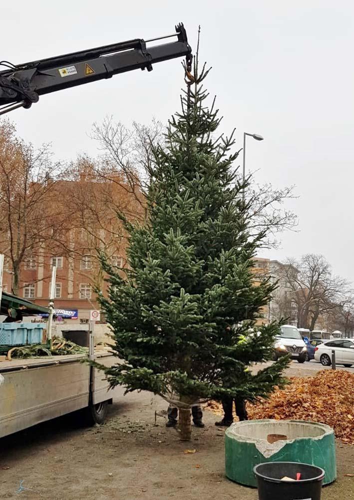 Weihnachten 2018: Tanne wird am Franz-Neumann-Platz aufgestellt