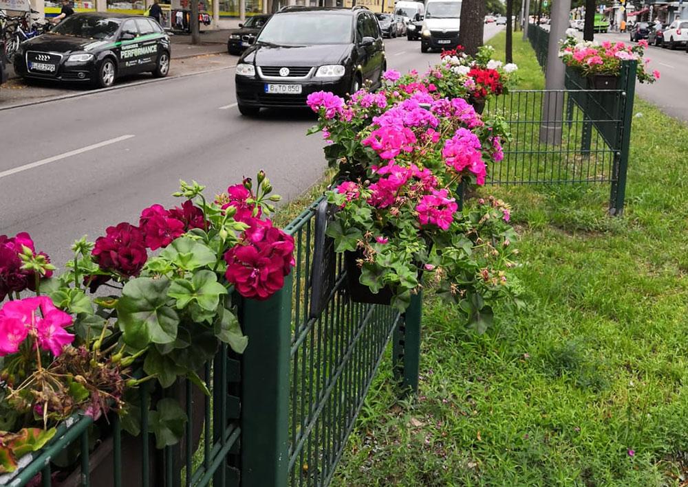 Blumen_Mittelstreifen